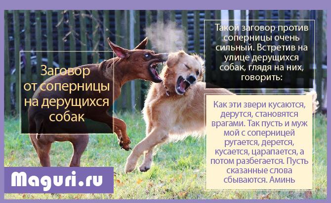 На собак