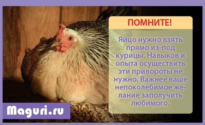 Яйцо из-под курицы